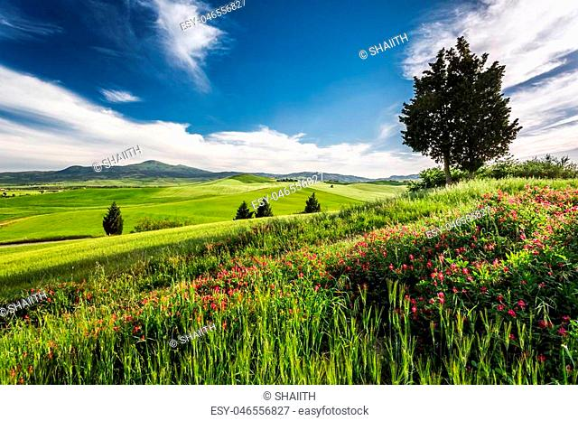 Green fields and meadows in the valley of Tuscany