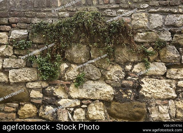 Hardy green spreading perennial plants growing through cracks and crevices in old fieldstone wall at the Kalemegdan Fortress in late summer, Belgrade, Serbia
