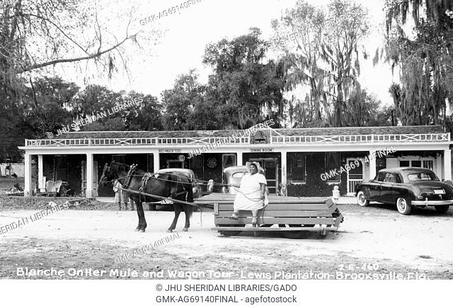Full-body portrait of African American Woman on a wagon pulled by a mule, on the Lewis Plantation in Brooksville, Florida, wearing a white dress