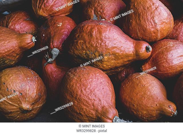 High angle close up of freshly harvested orange Hubbard pumpkins