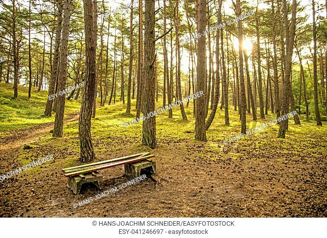forest of the Baltic sea in Poland with bench