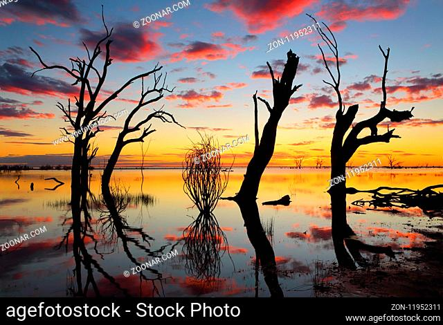 Sunset and silhouettes of old gnarly dead trees in the lake with reflections