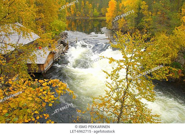 A cabin and Myllykoski rapids of Oulanka National Park in Kuusamo when forest glowing with autumn tints. Finland