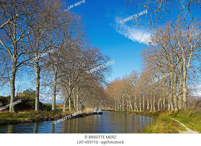 Avenue of sycamore trees along the Canal du Midi, Capestang, Dept. Hérault, Languedoc-Roussillon, France, Europe