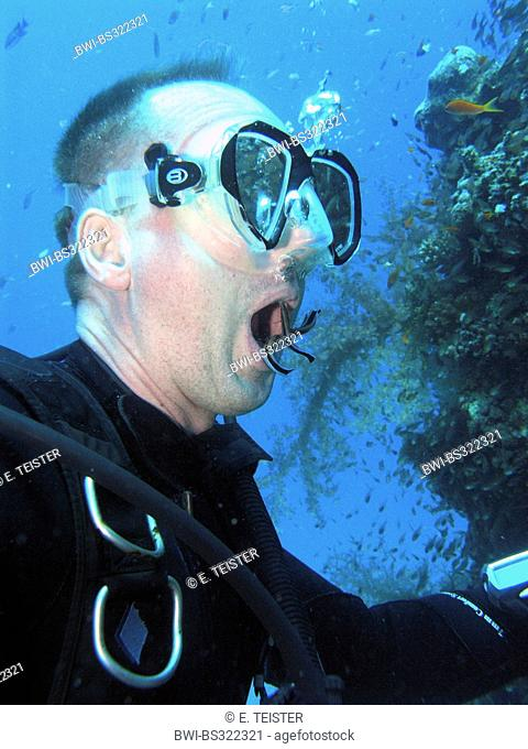 cleaner wrasses (Labroides spec.), scuba driver getting his teeth cleaned by cleaner wrasses, Egypt, noerdliches Rotes Meer