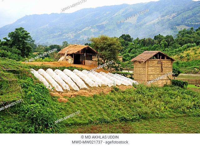 Agricultural land by the side of the Sangu river in Nilgiri, in the hill district of Bandarban in Bangladesh September 26, 2009