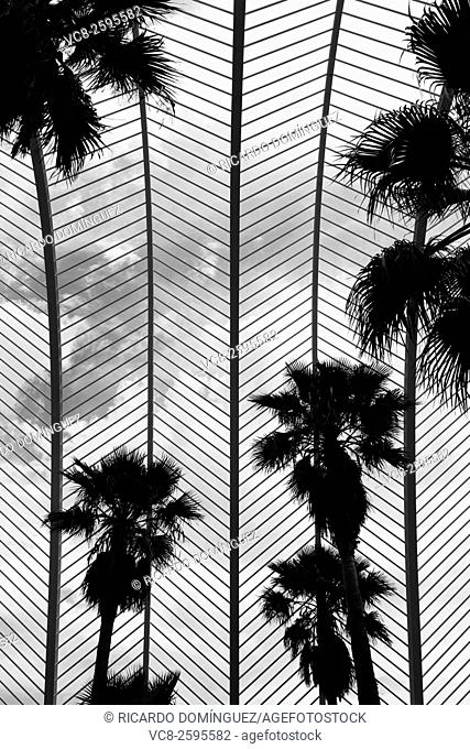 Detail of the Umbracle with palms, made by Santiago Calatrava. Valencia, Spain