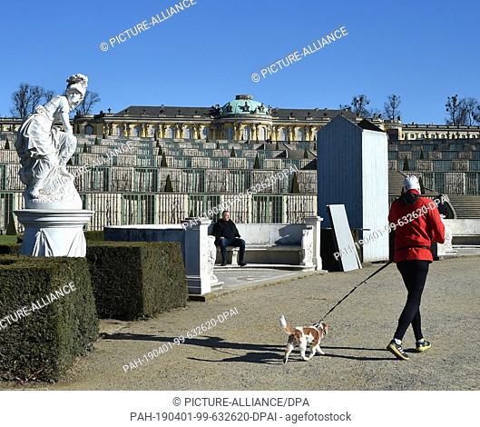 01 April 2019, Brandenburg, Potsdam: A jogger walks past a cozy sculpture on the main path on the ground floor in front of Sanssouci Castle