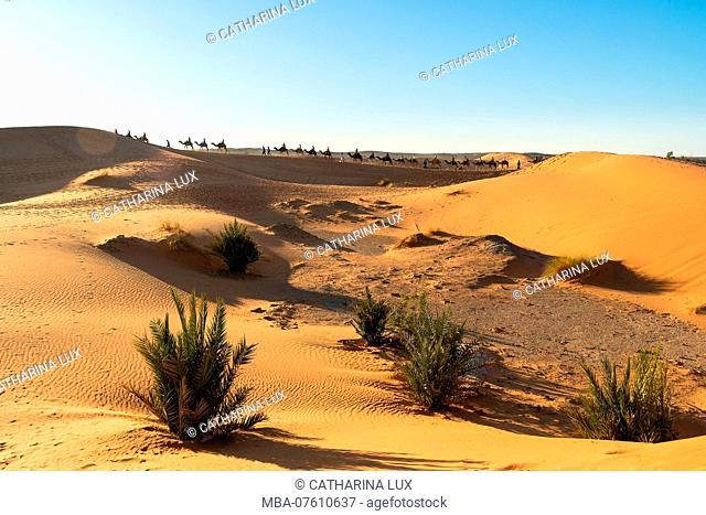 Morocco, Merzouga, Desert, Caravan