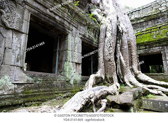Tree roots cover much of the ruins of Ta Prohm temple in Angkor Wat, Siem Reap, Cambodia. Ta Prohm is the modern name of the temple at Angkor