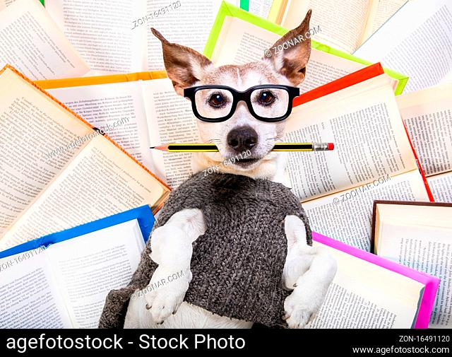 jack russell dog reading a book with nerd glasses, looking smart and intelligent, lying on books