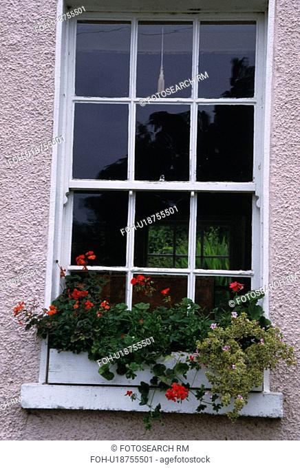 Red geraniums in windowbox below sash window
