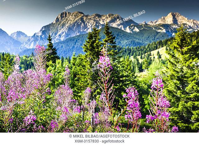 Mountains in summer with flowers. Velika Planina sky area. Upper Carniola region. Slovenia, Europe