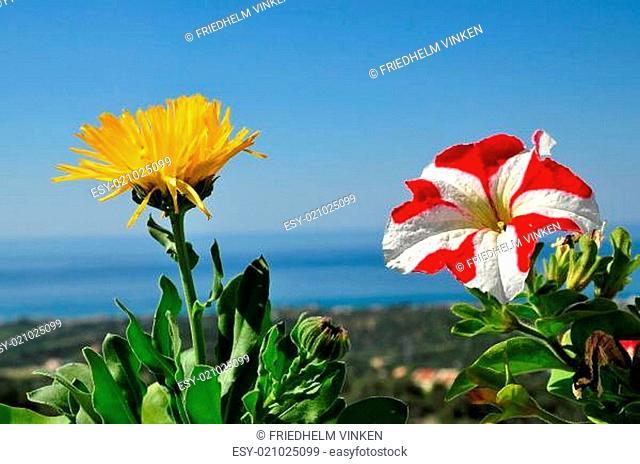 Blumenpracht mit Kretischem Meer im Hintergrund