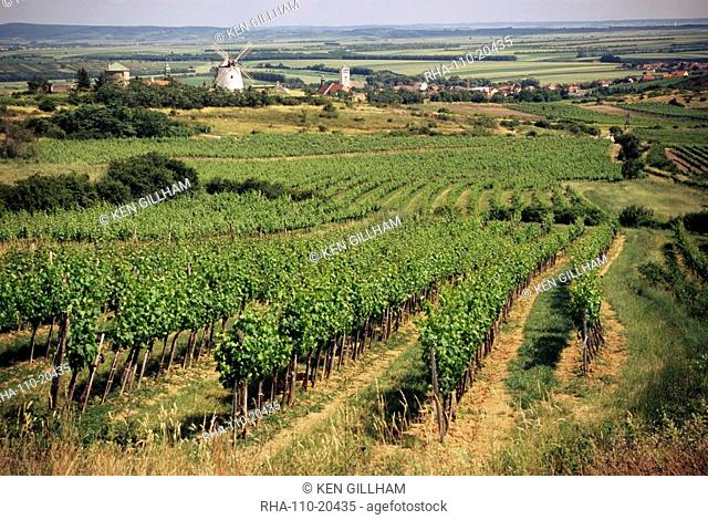 Vineyards around Retz, close to Czech border, with restored windmill in the distance, Lower Austria, Austria, Europe