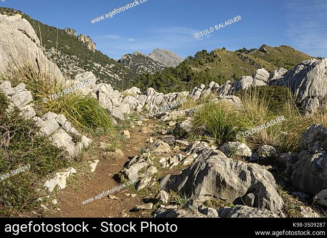 traditional cobblestone path, Sa Pica des Garrover, Tossals Verds section, lloseta, Mallorca, Balearic Islands, Spain