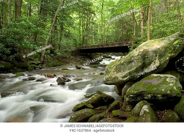 Roaring Fork stream on the Roaring Fork Motor Nature Trail in the Great Smoky Mountains National Park, Tennessee