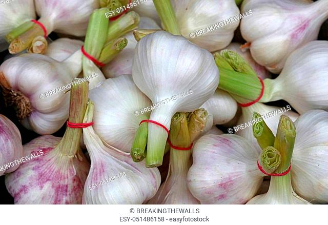 Bunch of fresh white and green garlic bulbs cloves sale on retail food market stall display, close up, top view, high angle