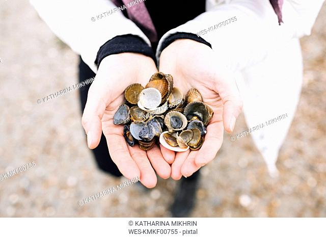 Woman's hands holding collected shells, close-up