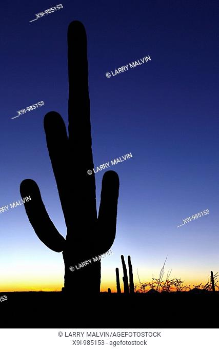 Sunset with silhouetted saguaro cactus in Saguaro National Park