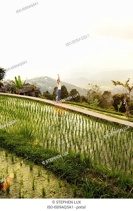 Woman on edge of rice fields, Gobleg, Bali, Indonesia
