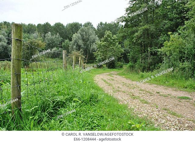 fence showing the wooden fenceposts and the overgrown grasses ad a path leading into the forest  Photo taken in Hoensbroek in the province of Limburg in the...