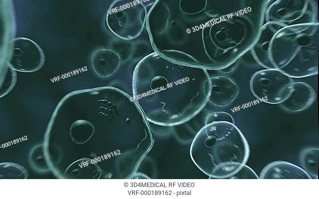 Animation depicting a microscopic view of human cells. The camera rotates 360 degrees around the cells