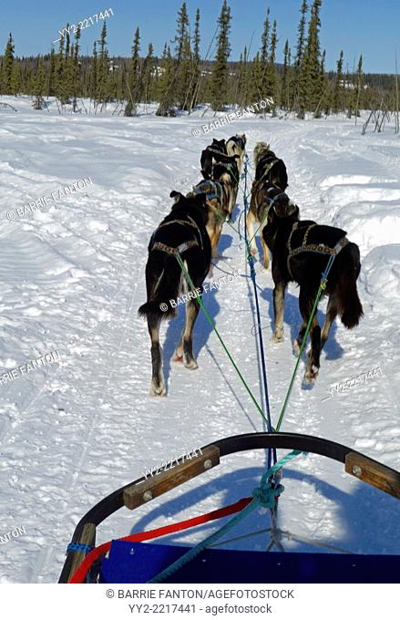 Dog Sledding, Fairbanks, Alaska, United States