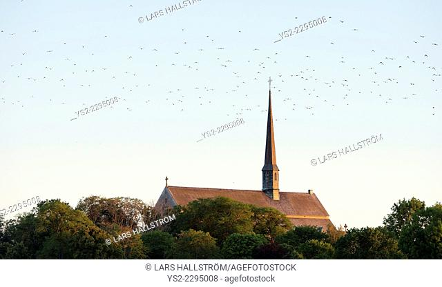 Flock of birds flying above Vadstena abbey, Sweden