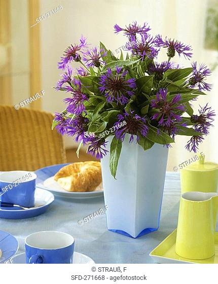 Vase of perennial cornflowers as table decoration