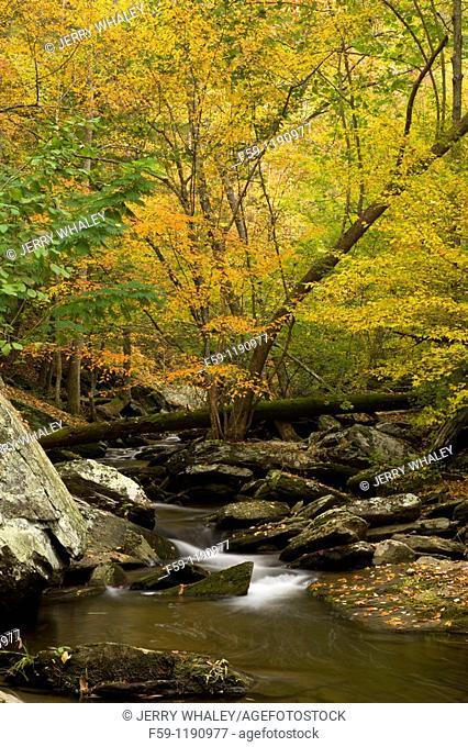 Autumn, Cherokee National Forest, TN