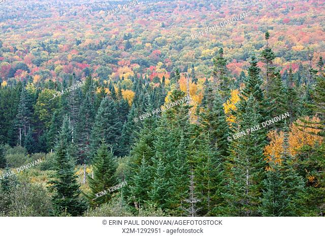 Forest along Route 302 during the autumn months in Carroll, New Hampshire USA which is part of the Whte Mountains