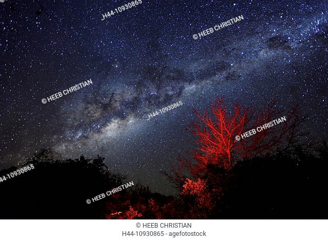 Africa, Bwa Bwata, National Park, Caprivi, Namibia, Night Sky, Trees, astrology, astronomy, milky way, red lights, stars
