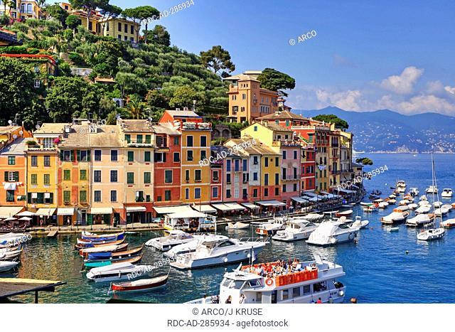 Harbour, Portofino, Golfo del Tigullio, province of Genua, Liguria, Italy