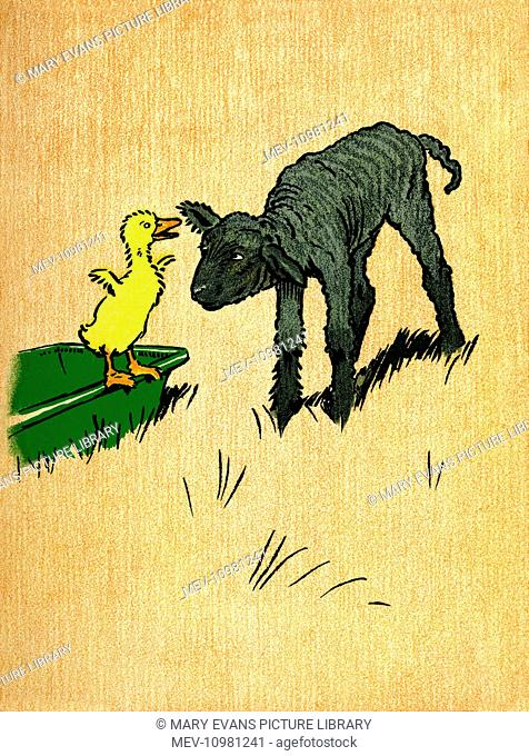 Illustration by Cecil Aldin, Farm Babies. Decimus Duckling meets a lamb in a field and suggests they play a game