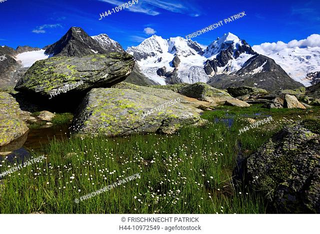 Alps, view, Fuorcla Surlej, mountain, mountain lake, mountains, mountain massif, mountain lake, Biancograt, flowers, Engadin, Engadine, rock, cliff