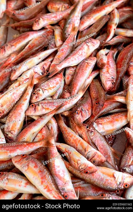 Red mullet on ice at the seafood market.Mediterranean fish and it is also the best ingredient of the diet