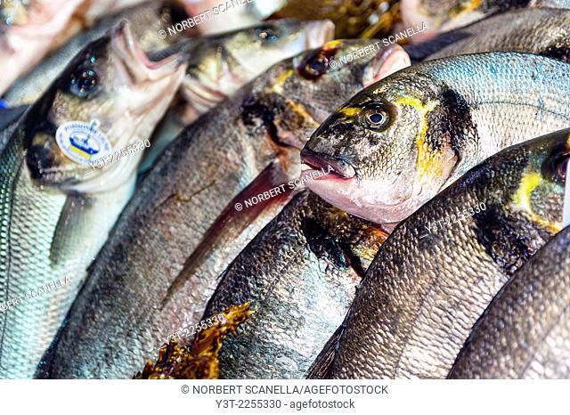 Europe, France, Var, Saint-Tropez. Traditional fish market. Sea bream