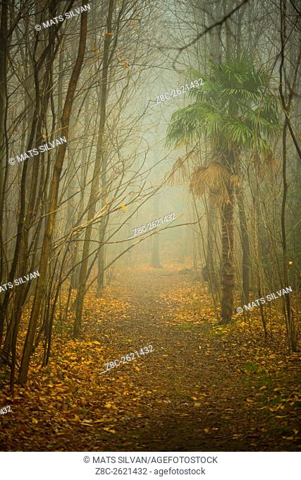 Foggy path with trees and palm tree in Ticino, Switzerland