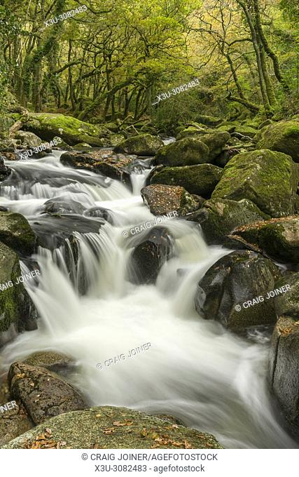 The River Plym flowing though Dewerstone Wood in autumn in Dartmoor National Park, Devon, England