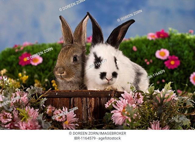 Swell 2 Bunnies Stock Photo Picture And Rights Managed Image Ocoug Best Dining Table And Chair Ideas Images Ocougorg