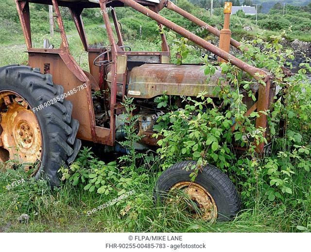 Rusty abandoned Fordson tractor, overgrown with brambles, Isle of Mull, Inner Hebrides, Scotland, July