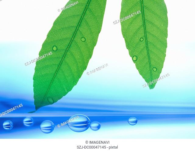 Leaves and waterdrops