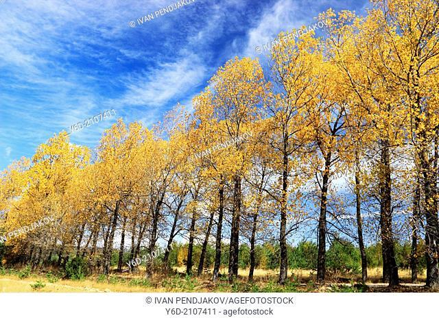 Colorful Autumn Trees, Pirin Mountains, Bulgaria
