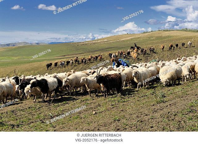 sheep drive in the lonely deserted landscape near David Gareja, Georgia - DAVID GAREJA, KAKHETI, GEORGIA, 29/09/2009