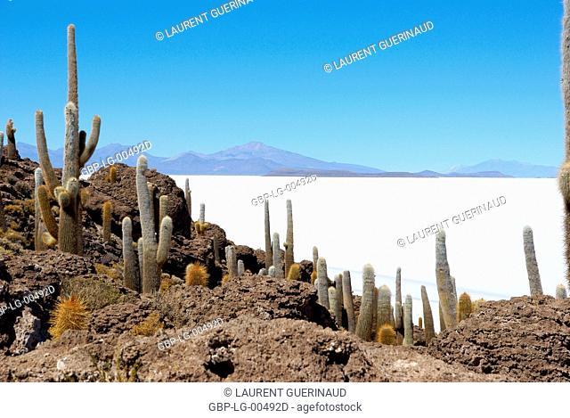 Salar of Uyuni, Desert of Lipez, Department of Potosi, Sud Lipez Province, La Paz, Bolívia