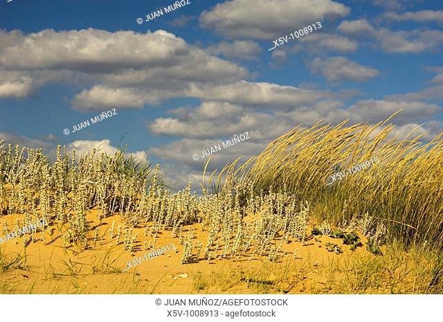 Coastal forest. Odiel Marshes Natural Park. Huelva. Spain