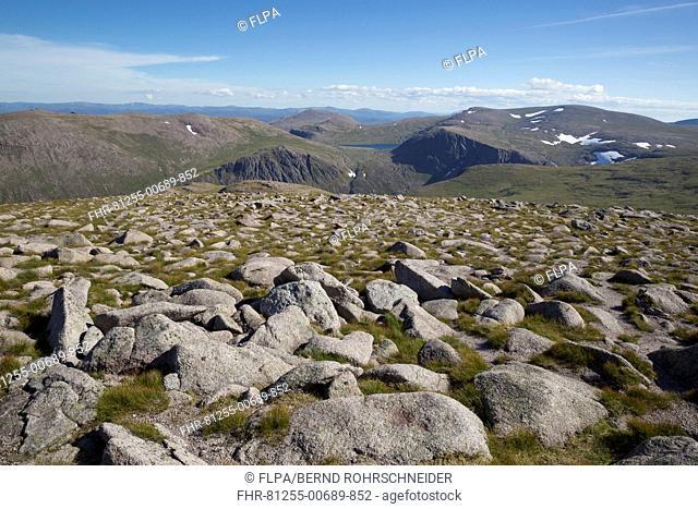 View of mountain summit, Cairn Gorm, Cairngorms N.P., Highlands, Scotland, July