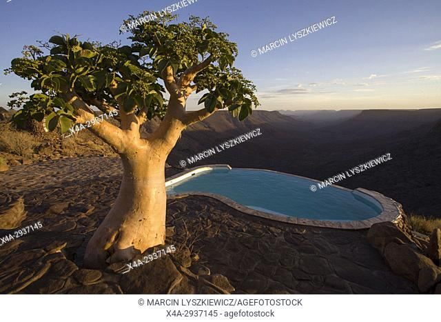 A tree and a pool in Grootberg lodge, Namibia