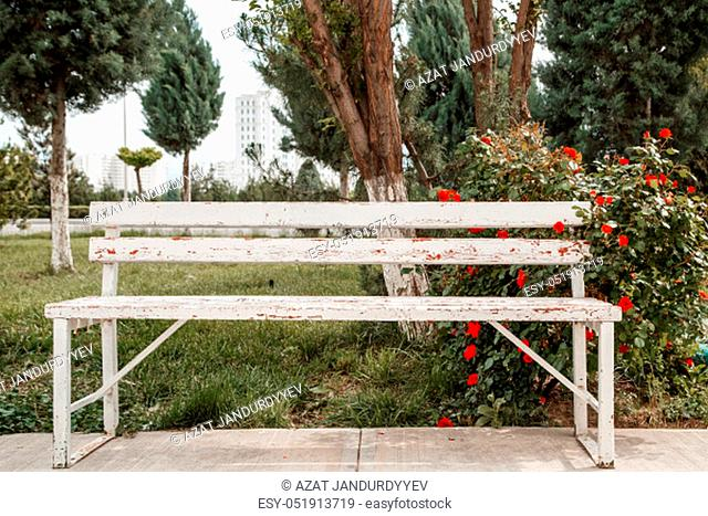 red roses next to a white wooden bench in the park. selective focus
